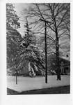 A winter lawn scene, Geneseo, N.Y.