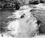 Fall Brook Falls, Geneseo, N.Y.